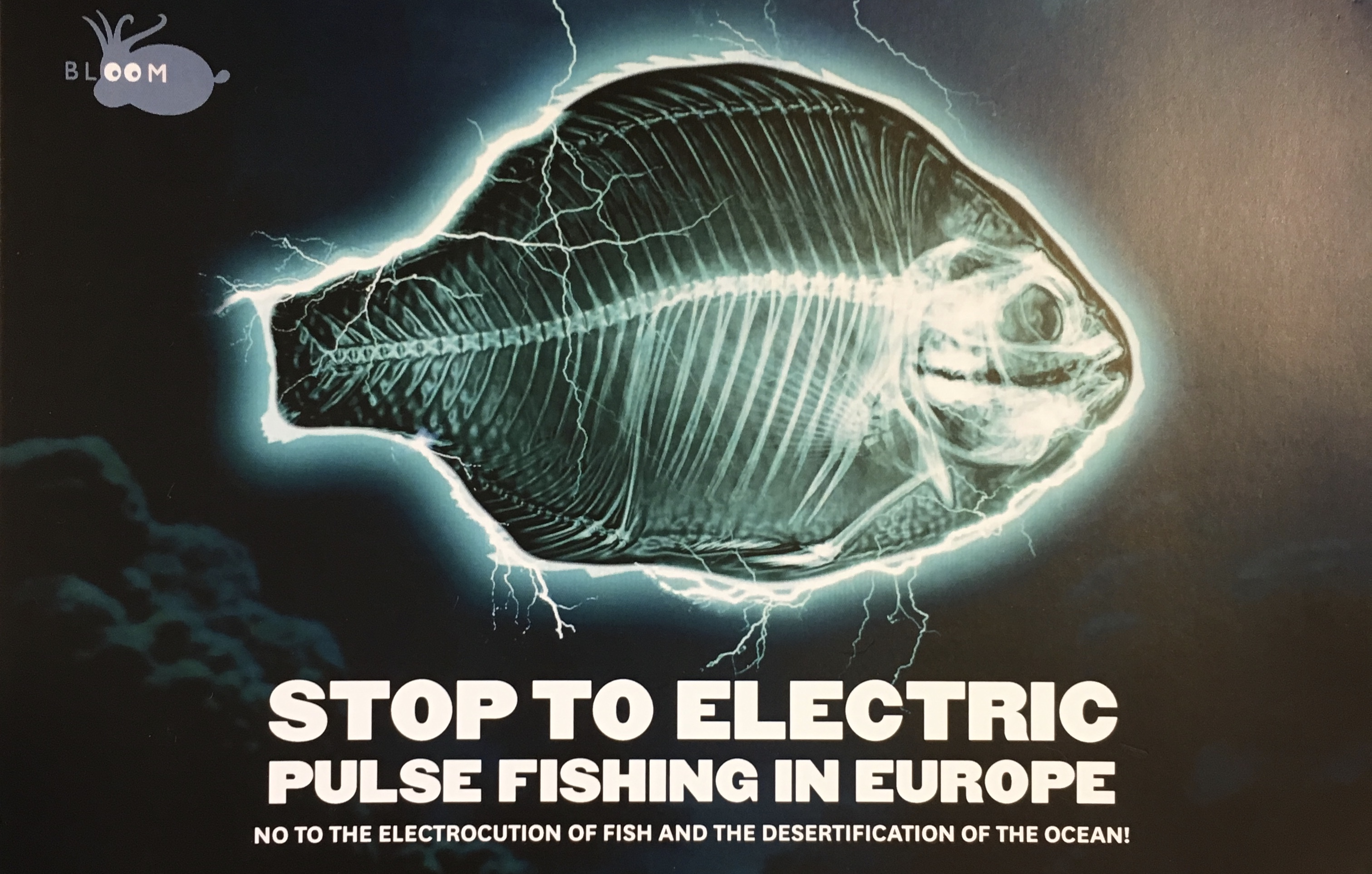 European Parliament Backs Ban on Pulse Fishing